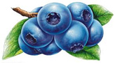 Town of Brigus Blueberry Festival